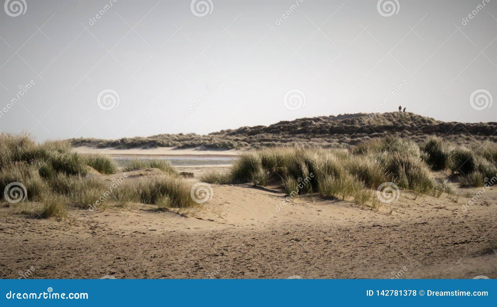 在沙丘多西特英国的沙丘