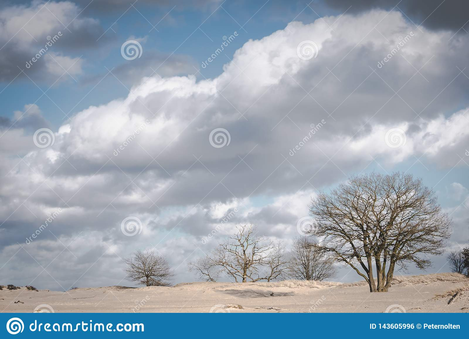 在沙丘风景的树在与云彩的一个晴朗的冬日