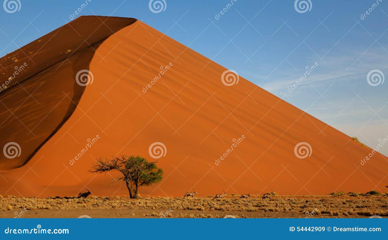 在沙丘45, Sossusvlei,纳米比亚的大羚羊羚羊属