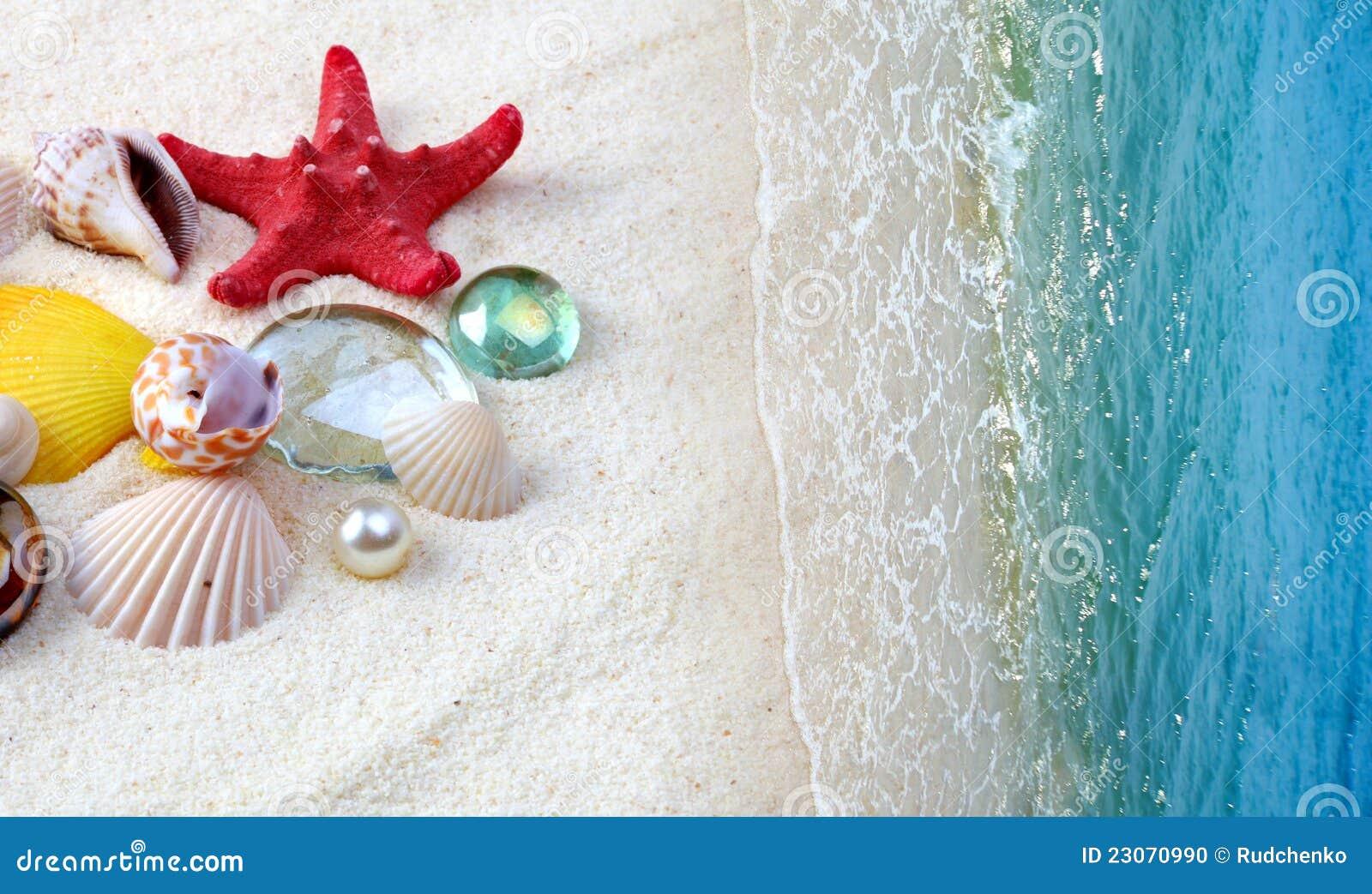 在沙子海滩的壳