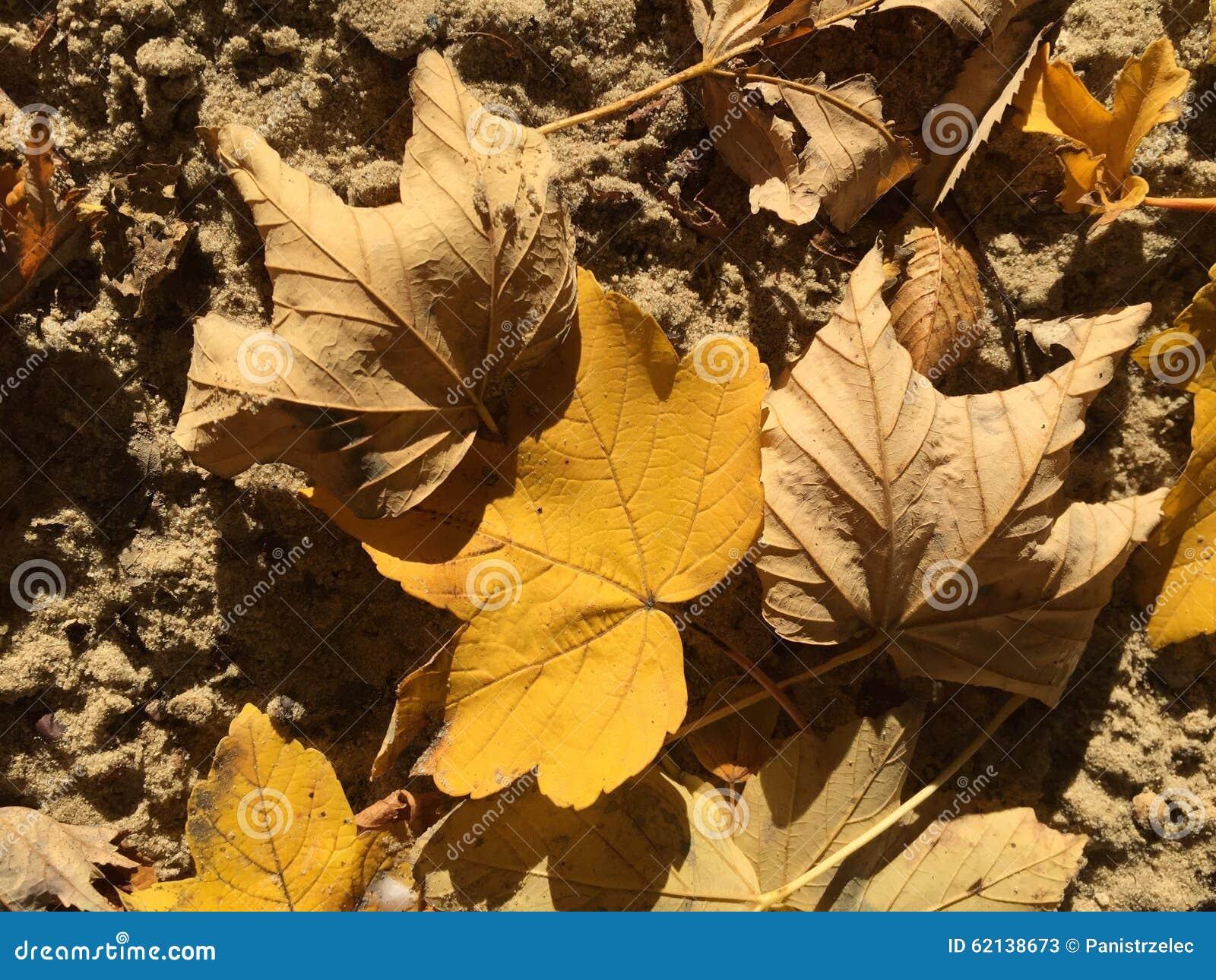 在沙子的秋天黄色和棕色叶子