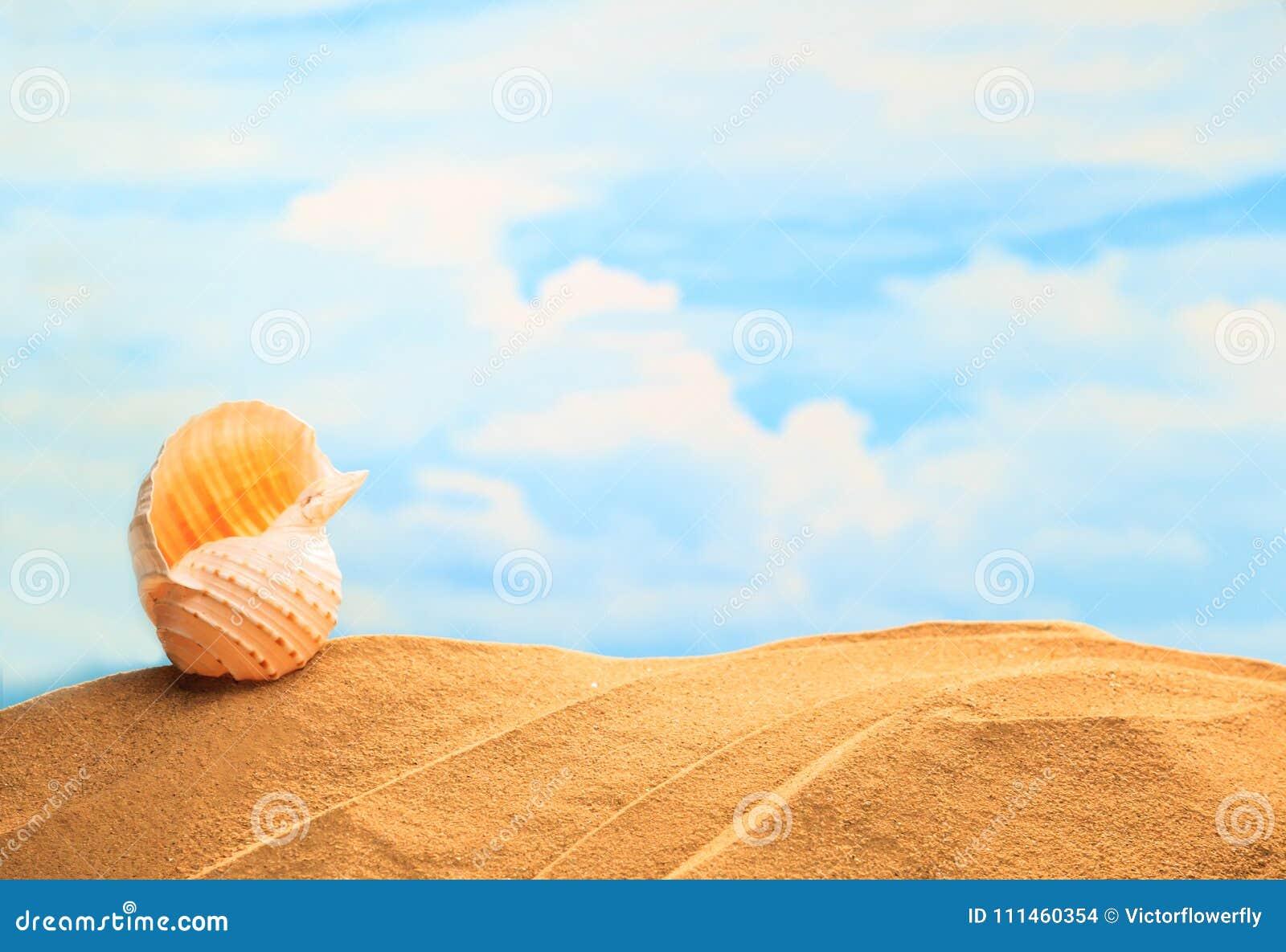 在沙滩的夏令时季节性,白色黄色贝壳有晴朗的五颜六色的蓝天背景和拷贝空间