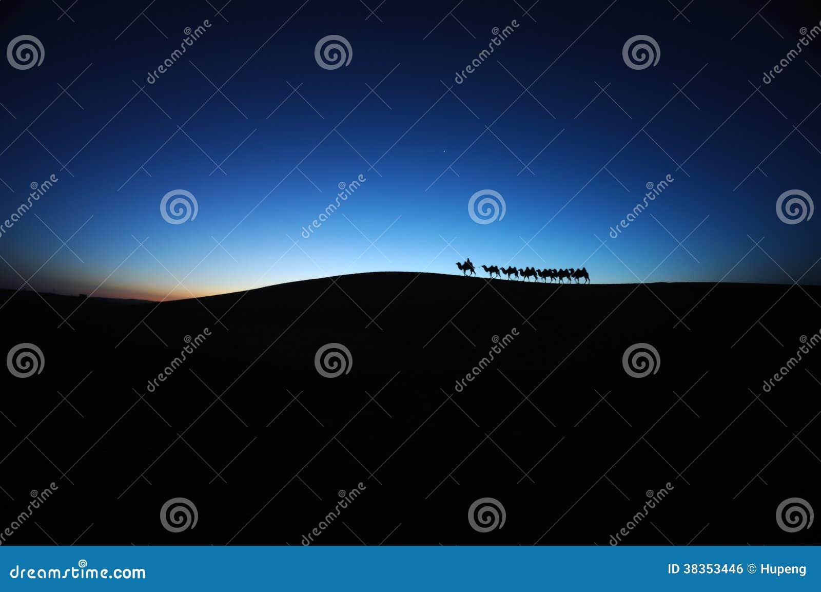 在沙漠黎明的骆驼有蓬卡车