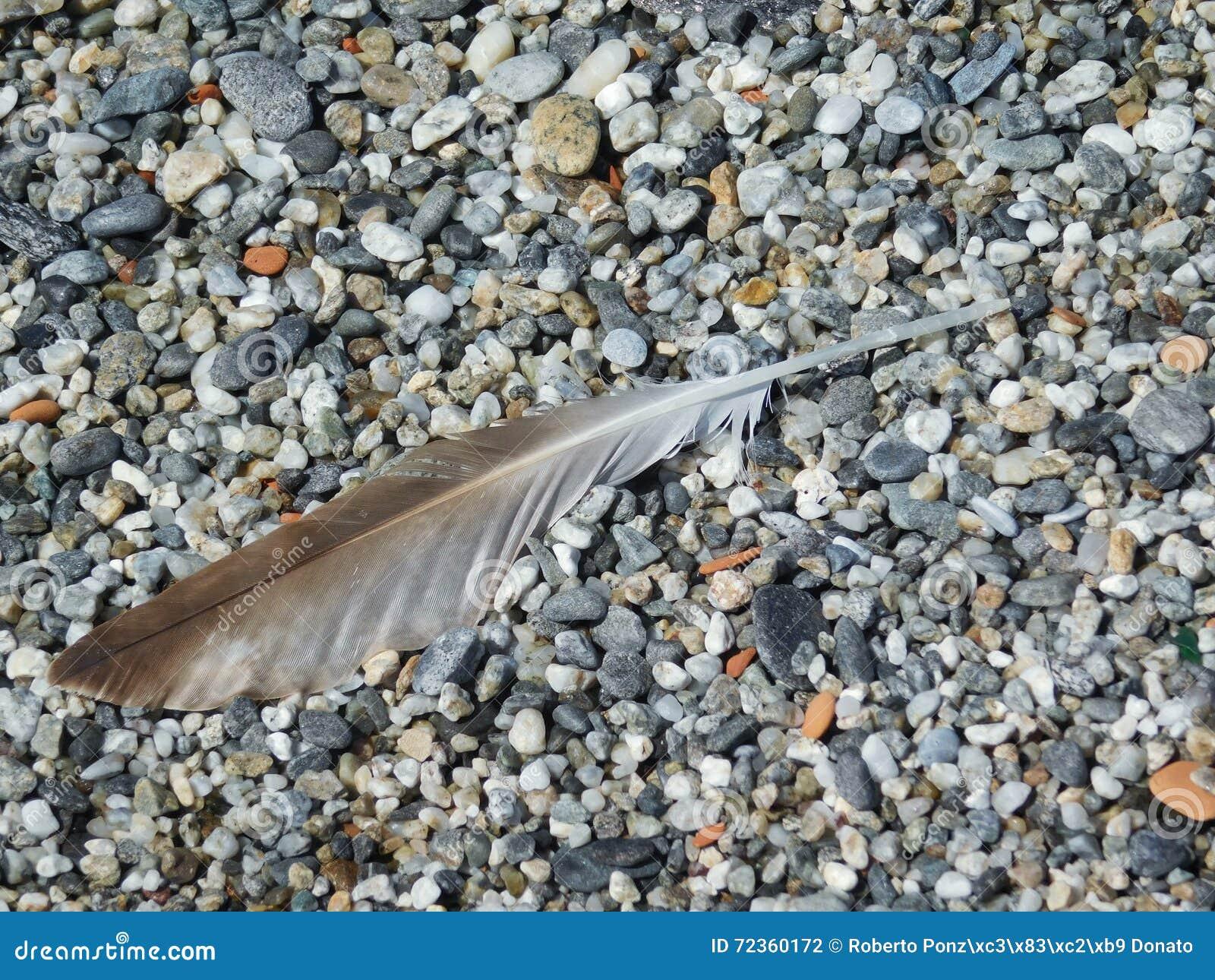 在沙粒海滩的一根羽毛