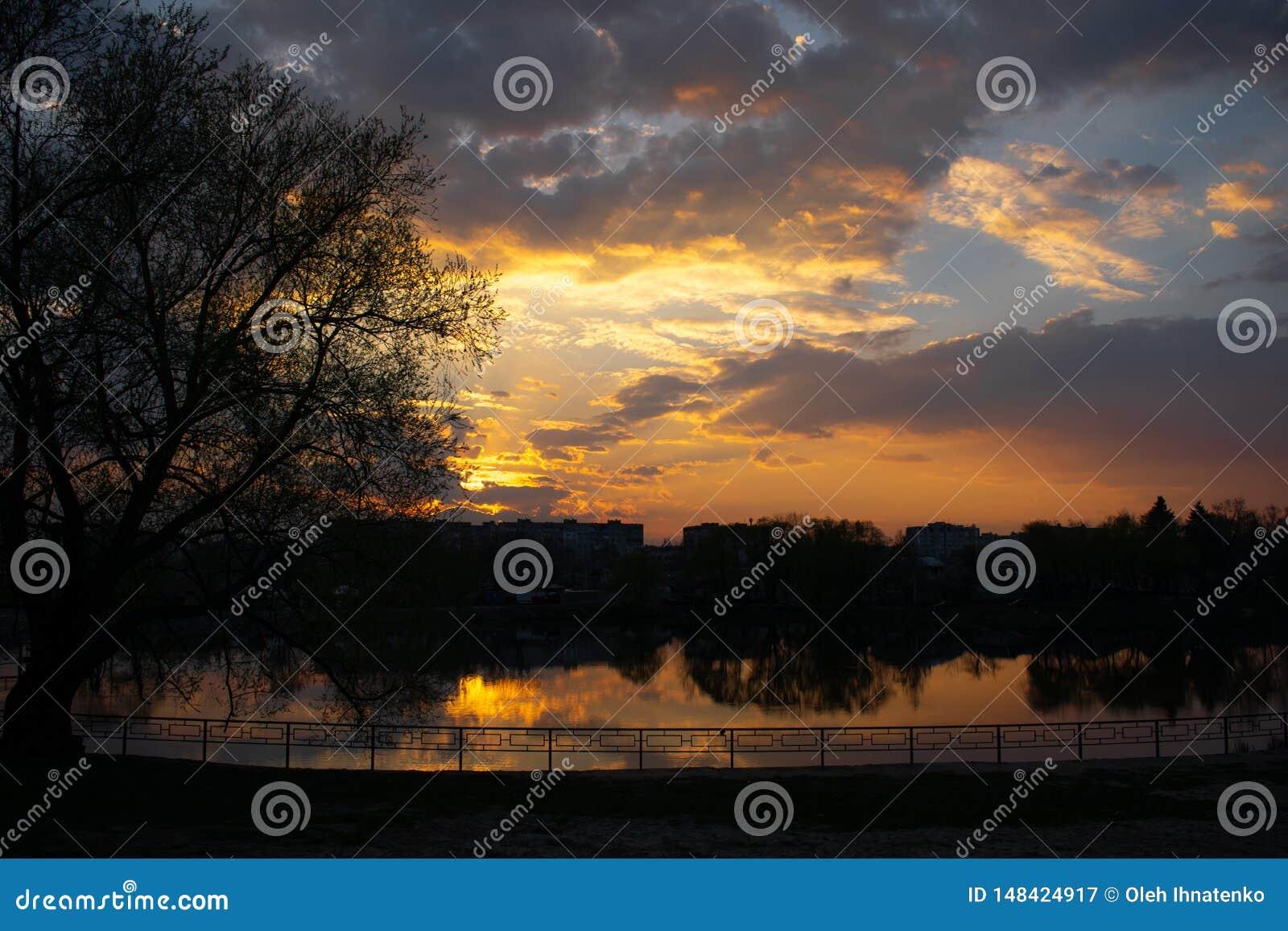 在河沿的日落与树