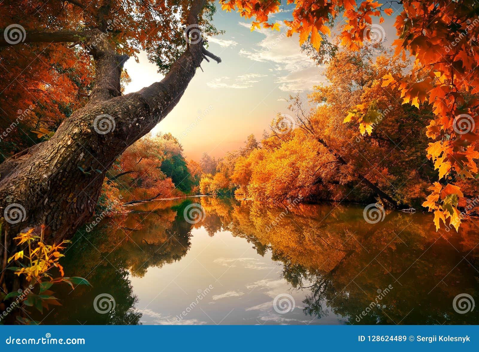 在河的橙色秋天
