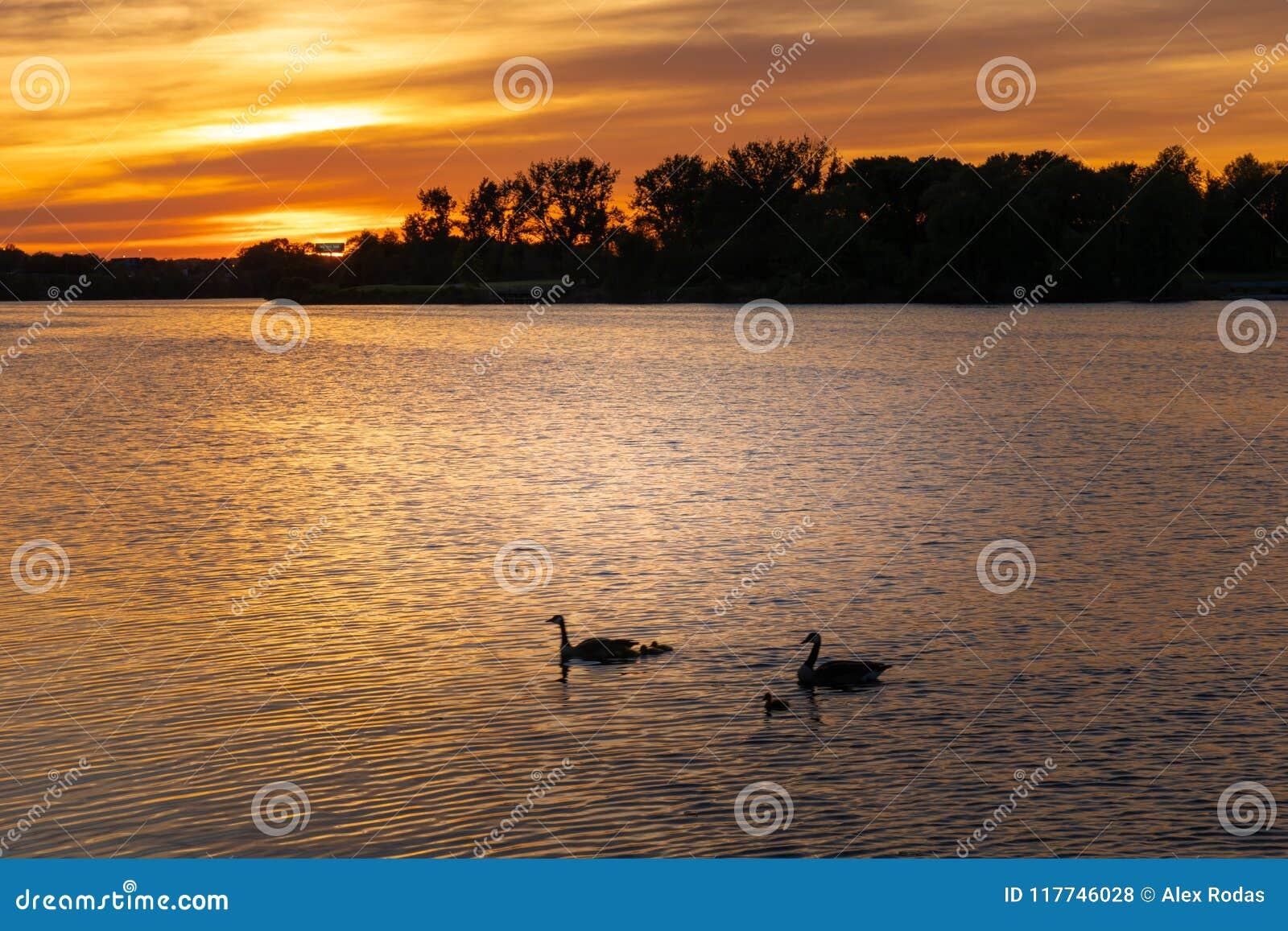 在河的美好的日落有gooses的