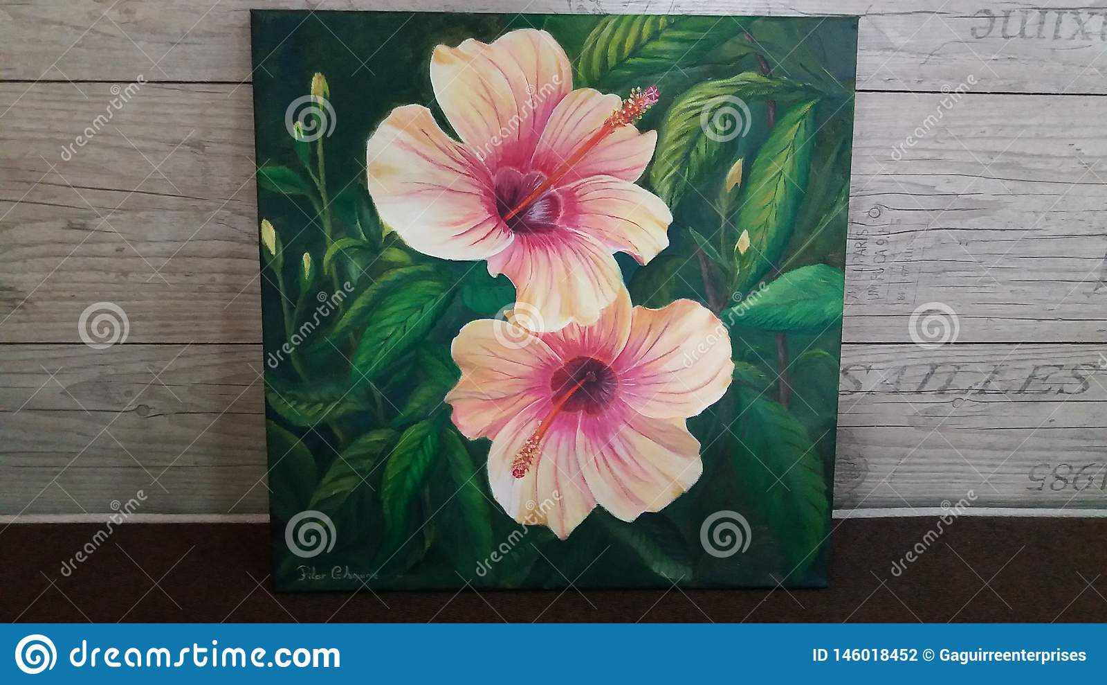 在油绘的大和美丽的木槿花