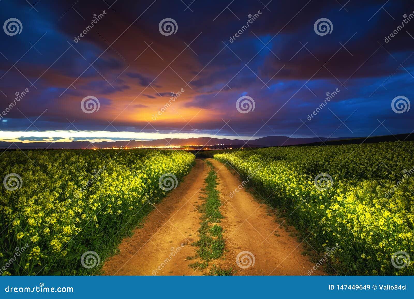 在油菜籽领域,美好的春天夜的剧烈的云彩