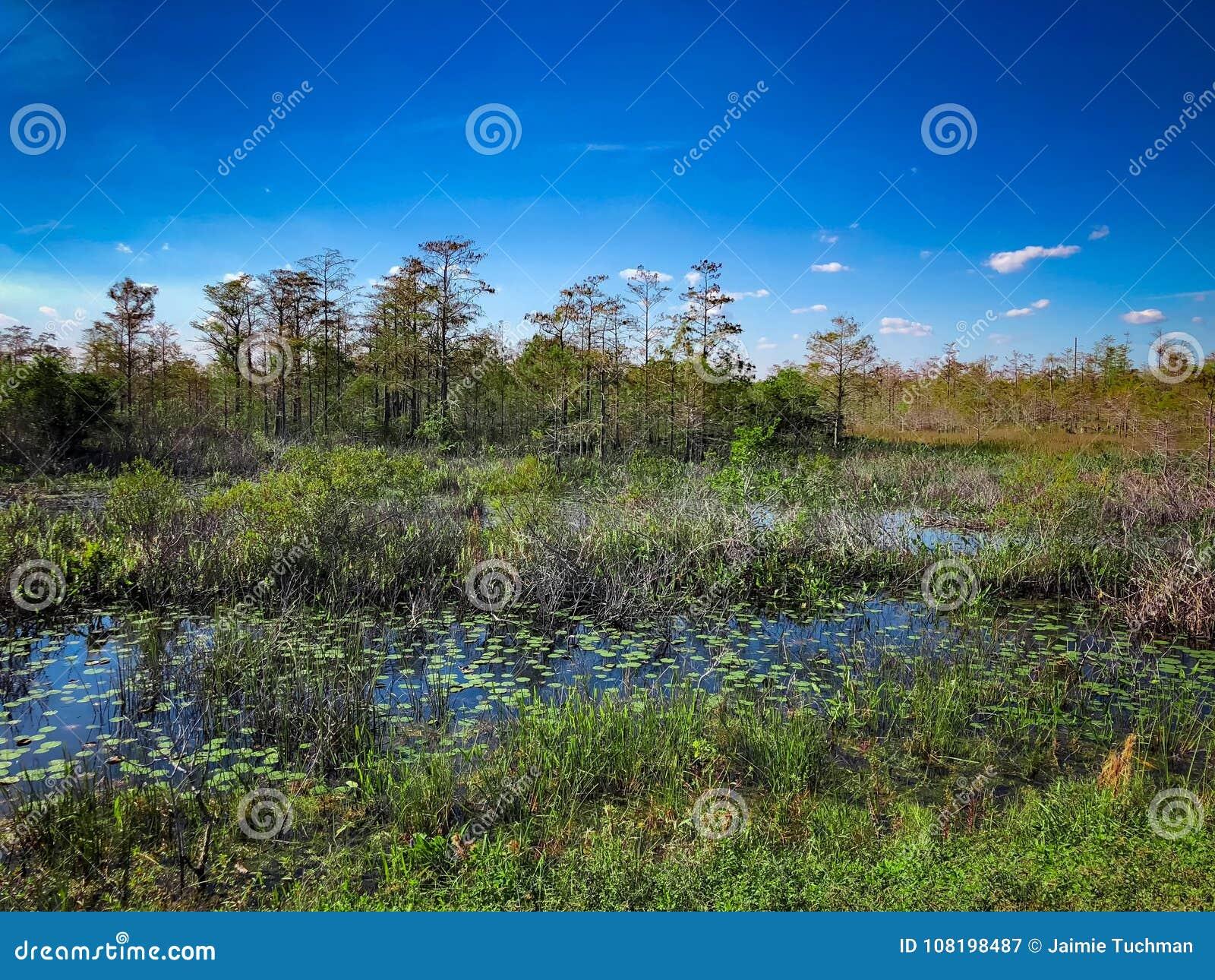 在沼泽的夏天