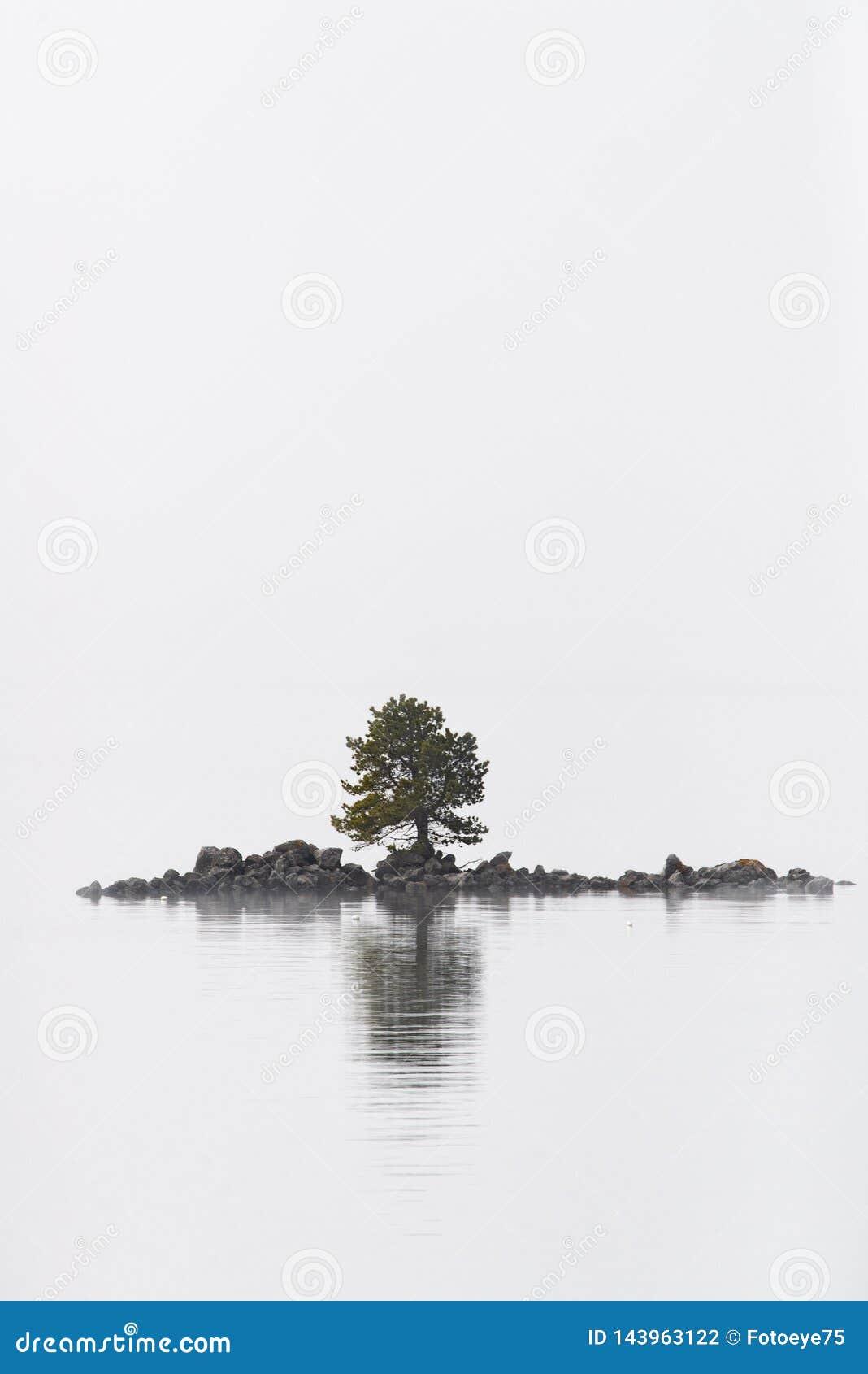 在海岛上的偏僻的树