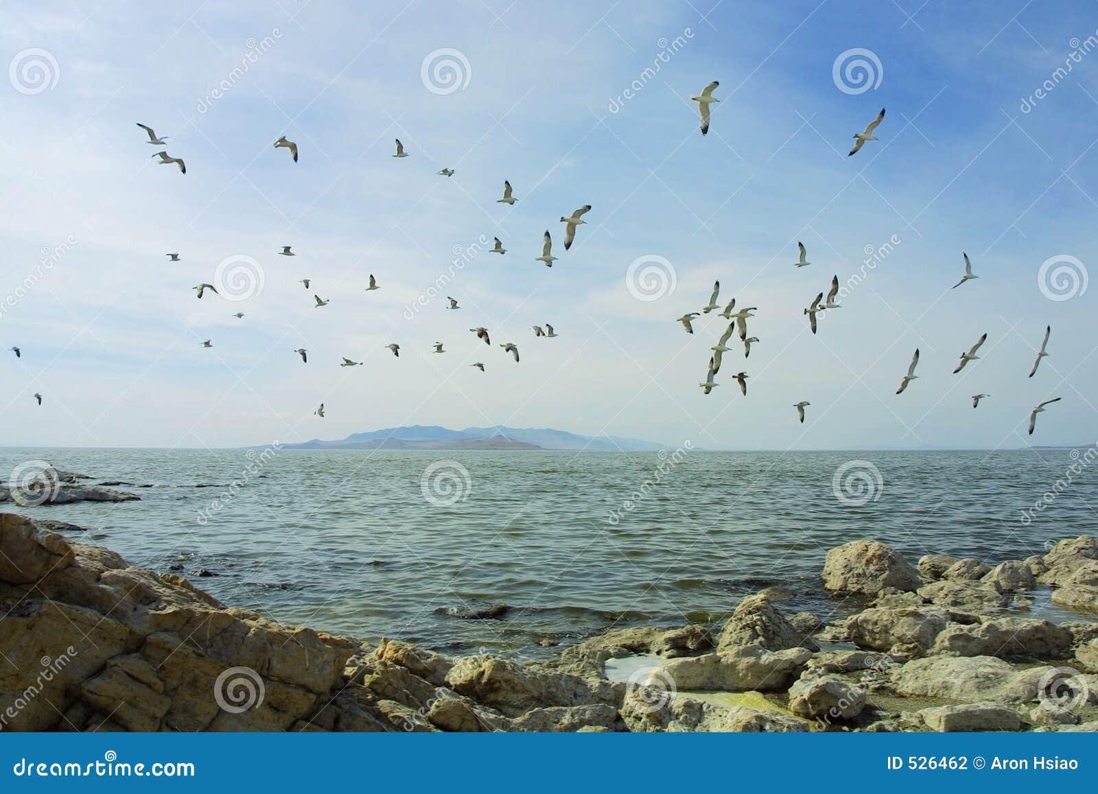 Download 在海湾群之上 库存照片. 图片 包括有 高尚, 小珠靠岸的, 户外, 崎岖, 本质, 自然, 芳香, 海鸟, 浮动 - 526462