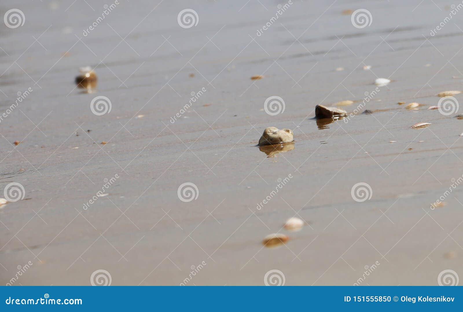 在海滩的小光滑的优美的石头在海、波浪和天空背景的沙子  夏天发光的纹理拷贝空间