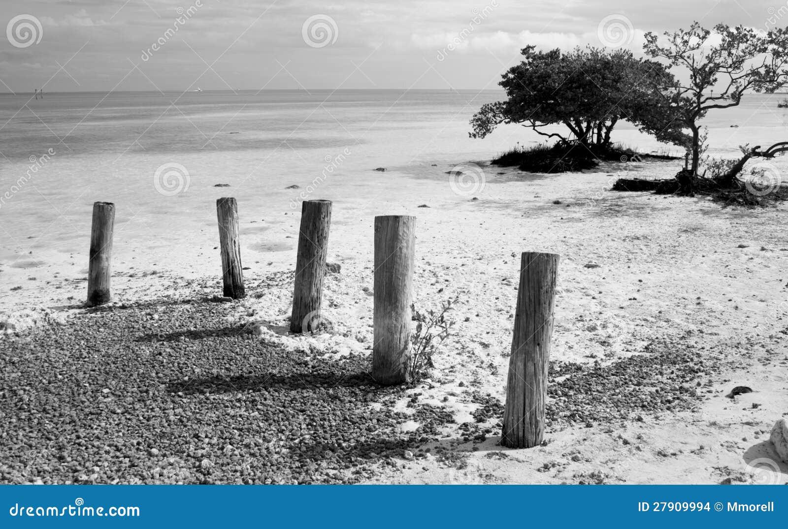 在海滩的打桩