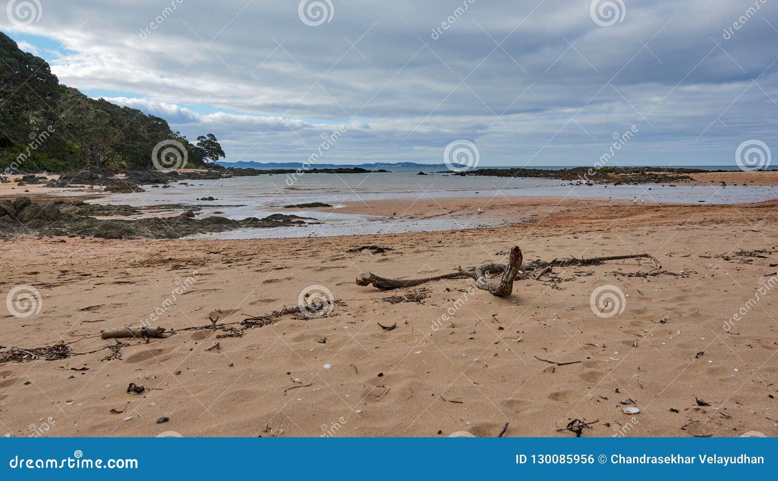 在海滩的漂流木头在缆绳海湾,mangonui新西兰