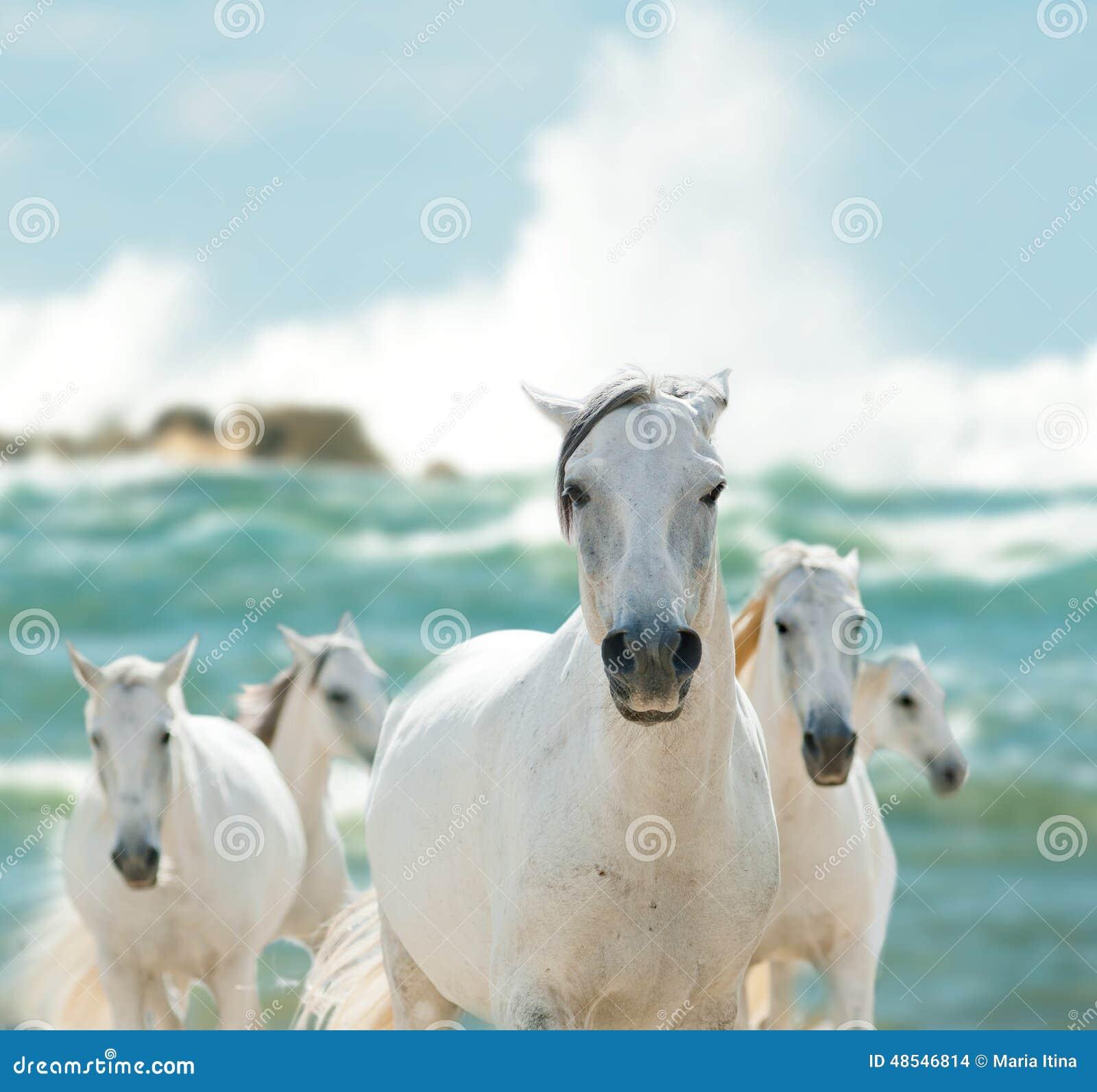 在海的白马