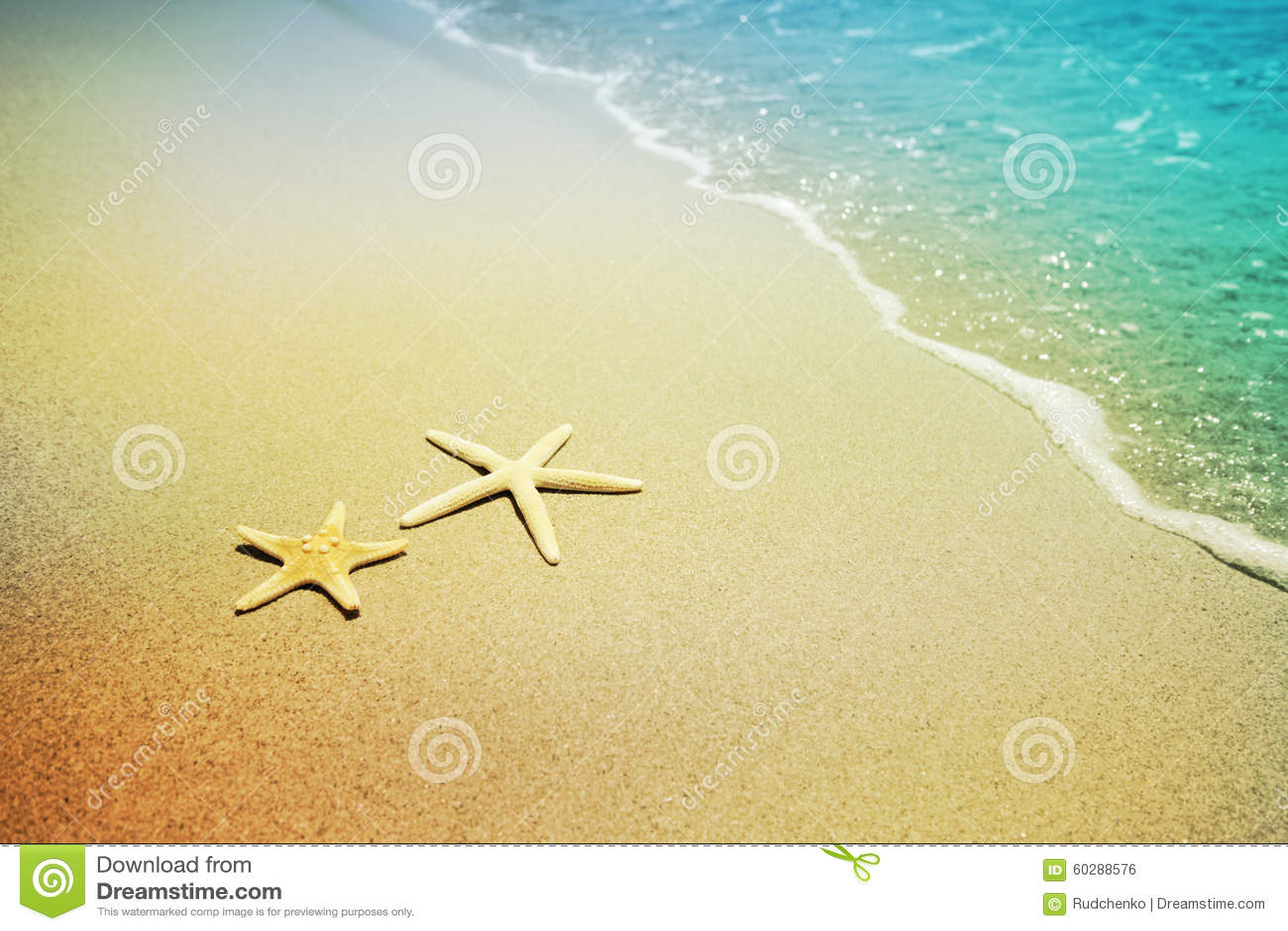 在海滩沙子的海星