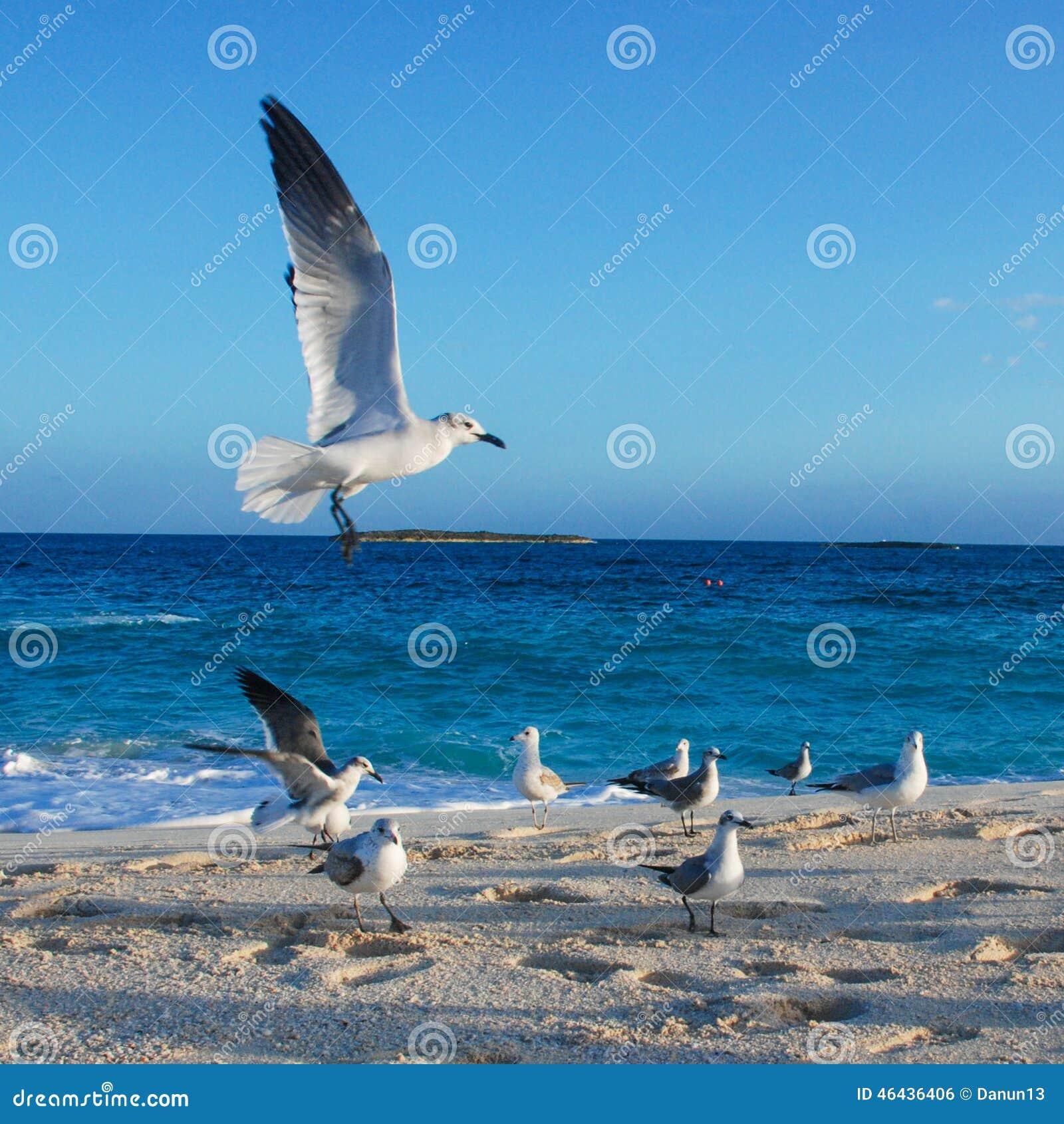 海鸥群在海滩的由海洋.图片