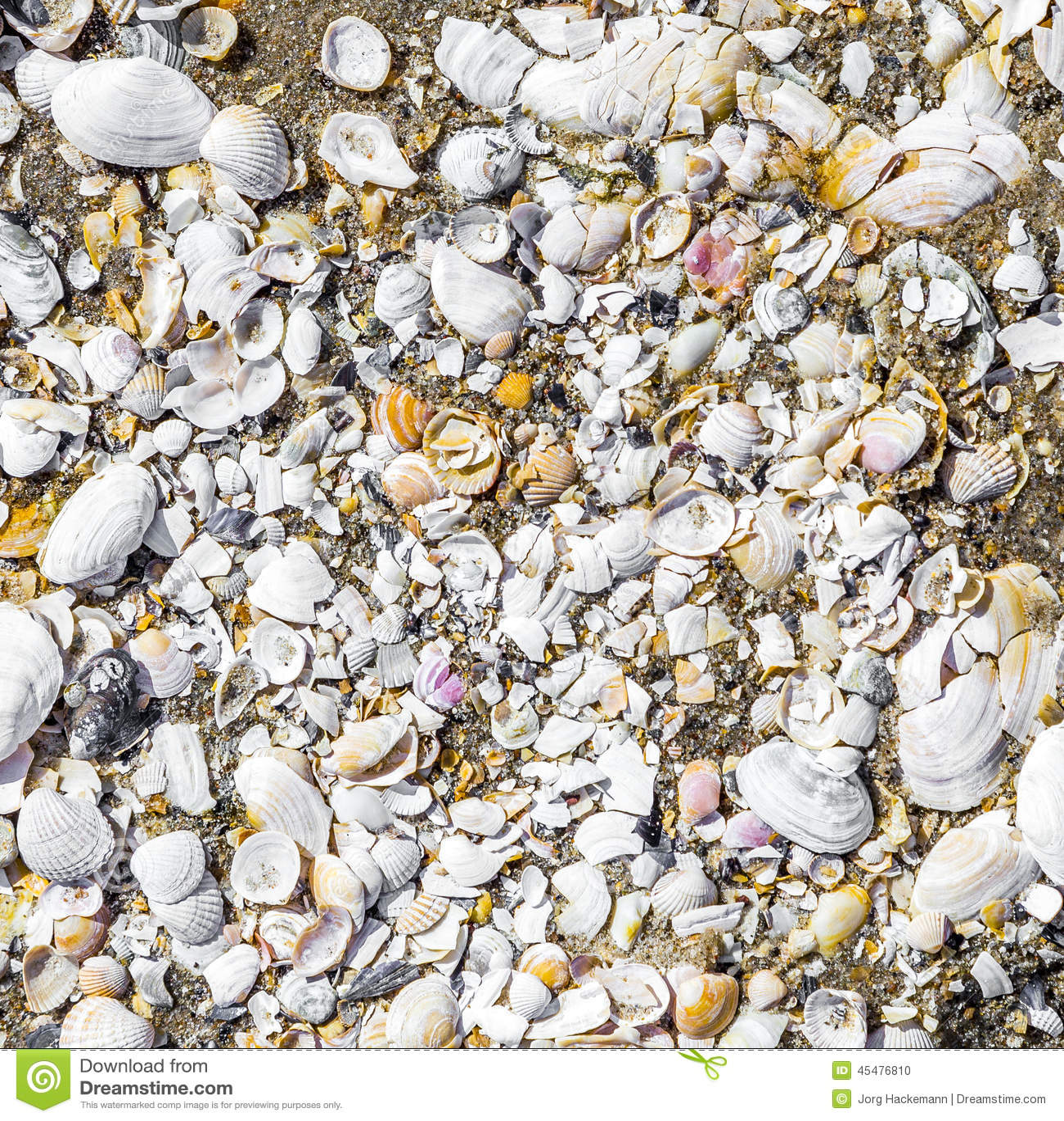 在海滩的壳