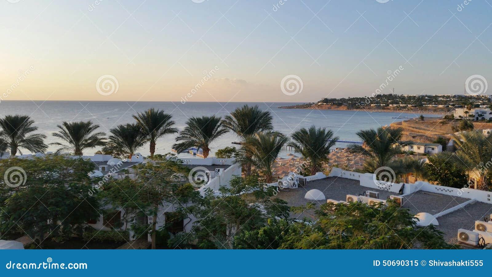 Download 在海滩的许多棕榈 库存图片. 图片 包括有 掌上型计算机, beauvoir, 背包徒步旅行者, 女演员 - 50690315