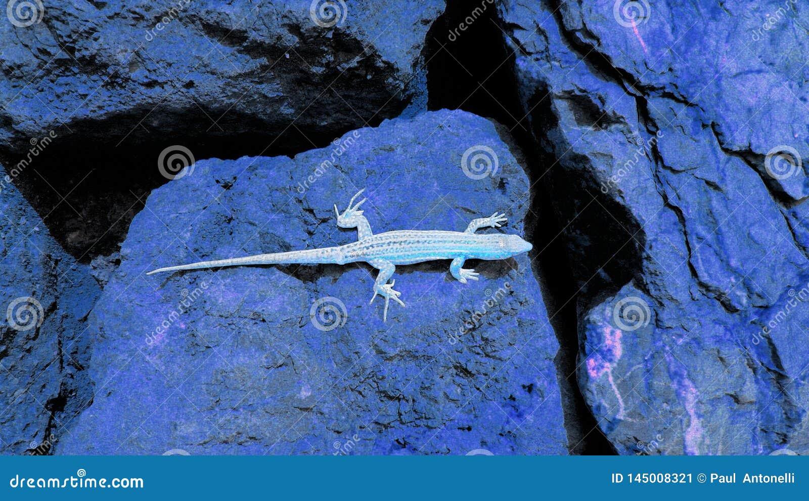 在深蓝冰砾的艺术性的浅兰的蜥蜴