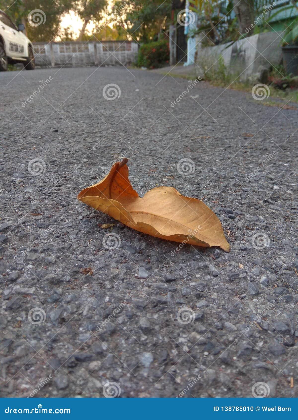 在混凝土路地板上下落的一片干燥叶子