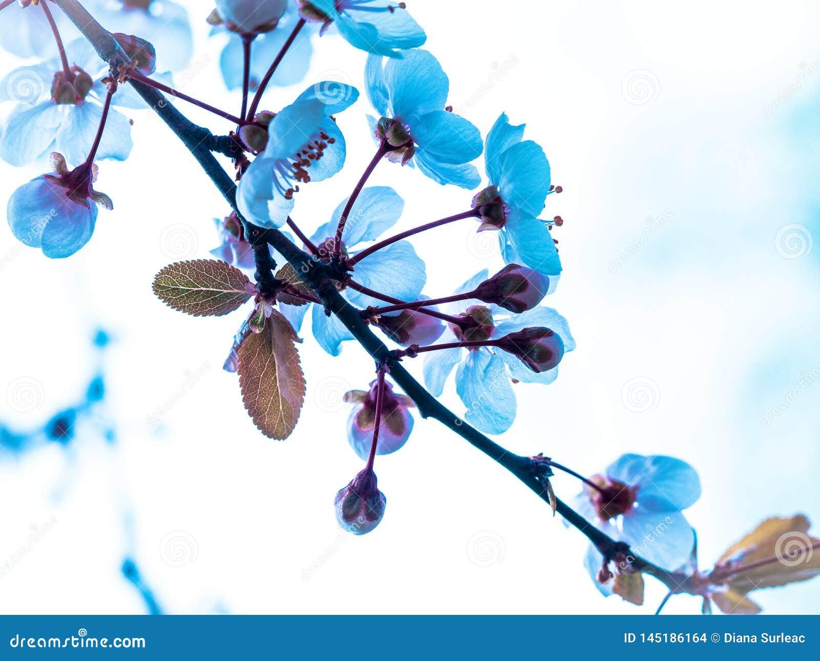 在清楚的天空的蓝色花