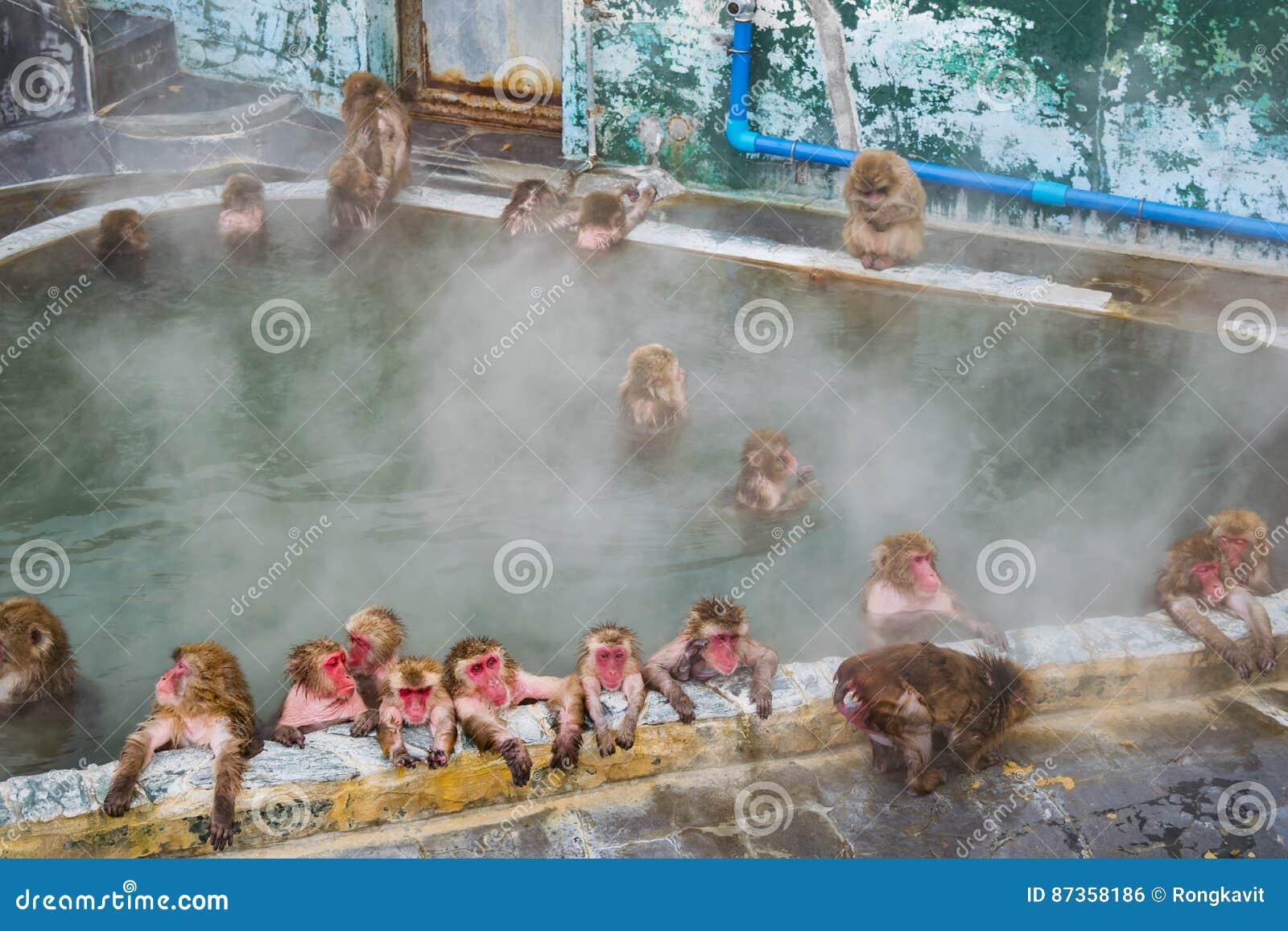 在温泉函馆,日本在参议员的,日本雪猴子短尾猿