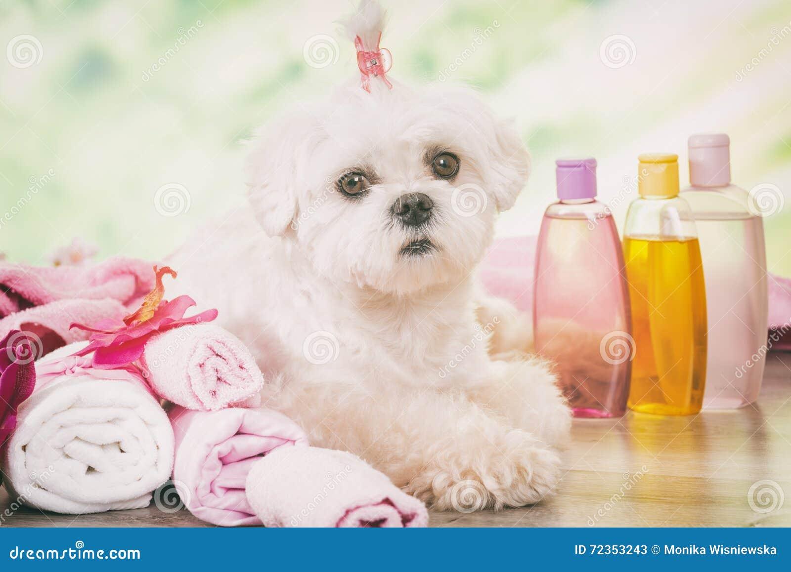 在温泉的小犬座