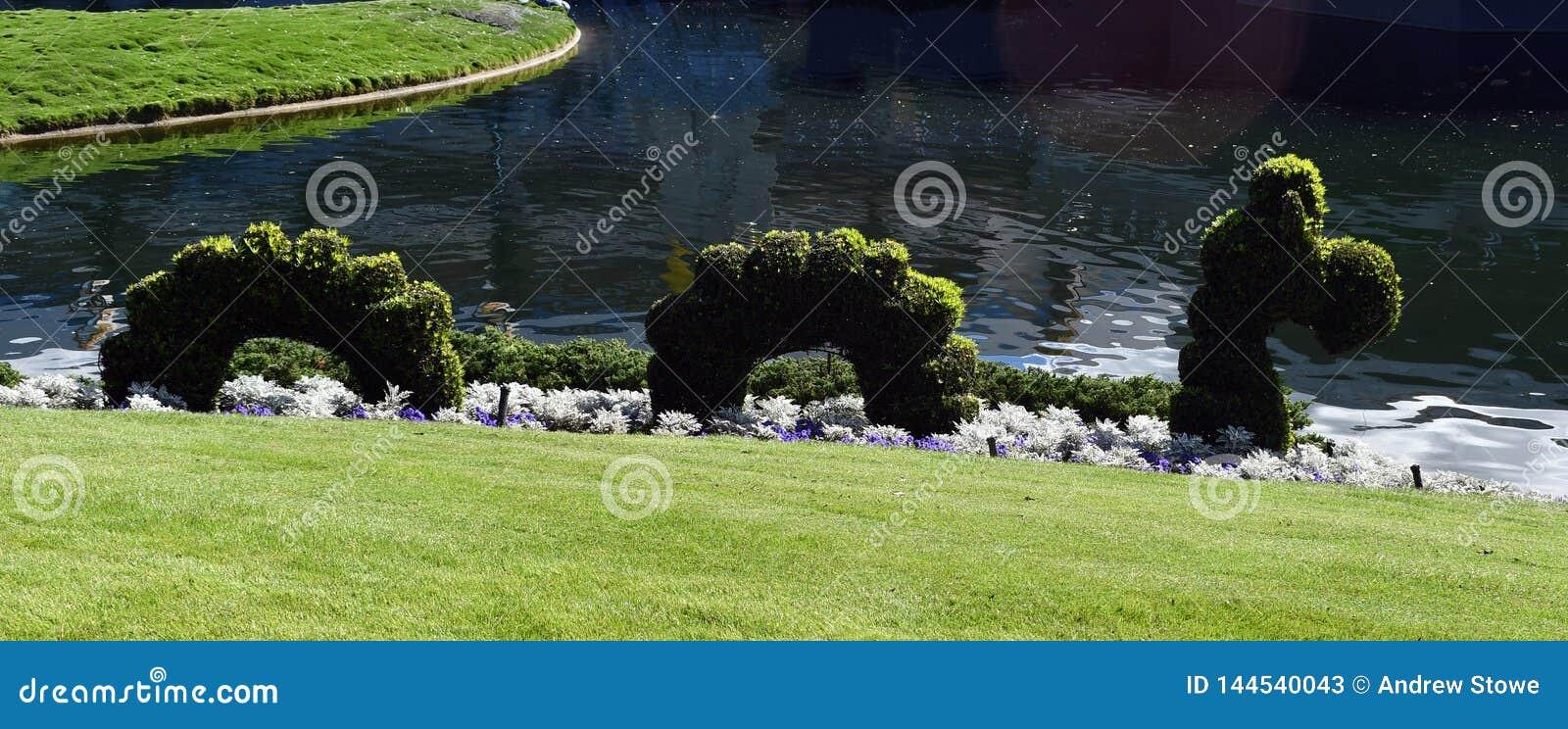 在湖旁边的蛇灌木