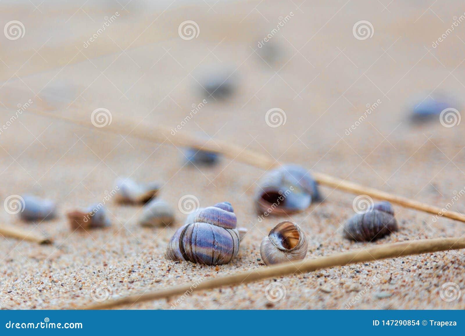 在湖的岸的贝壳沙子的