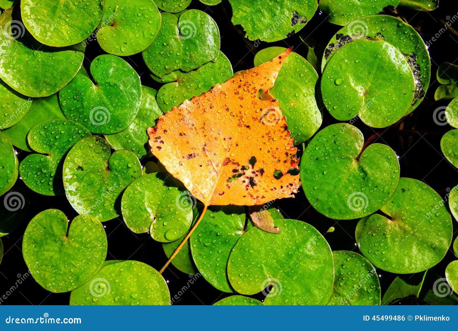 在湖leafage的秋天叶子