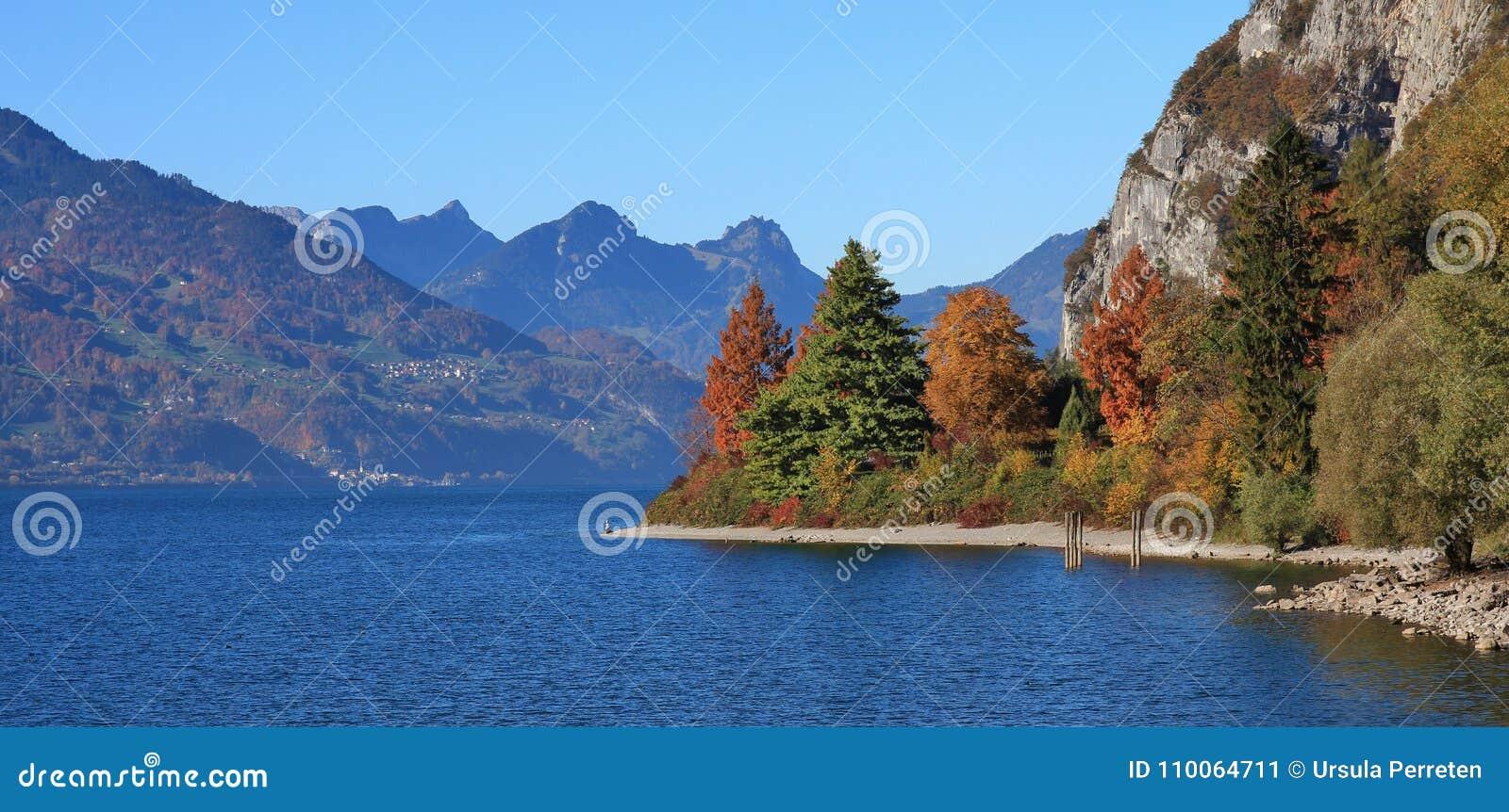 在湖Walensee,瑞士岸的五颜六色的树  autum