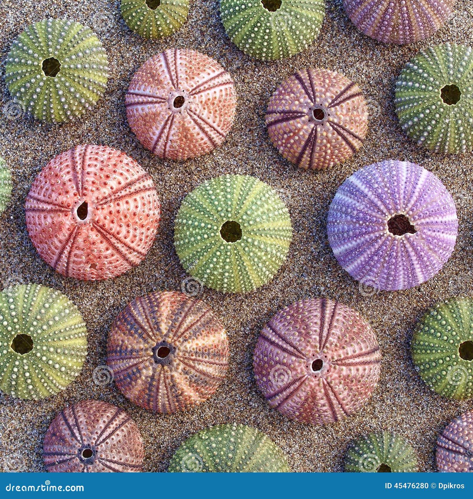 在湿沙子的五颜六色的海顽童