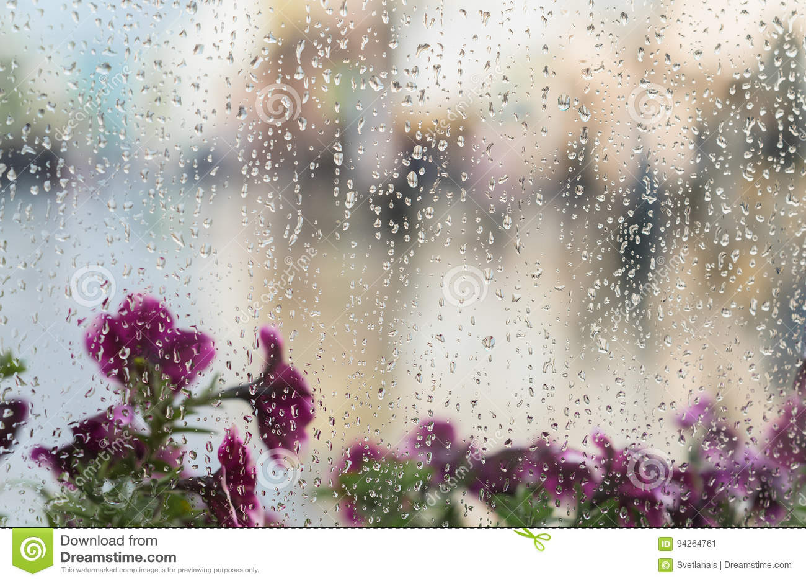 在湿窗口与雨下落,被弄脏的街道bokeh后的紫色花 春天天气,季节的概念,现代