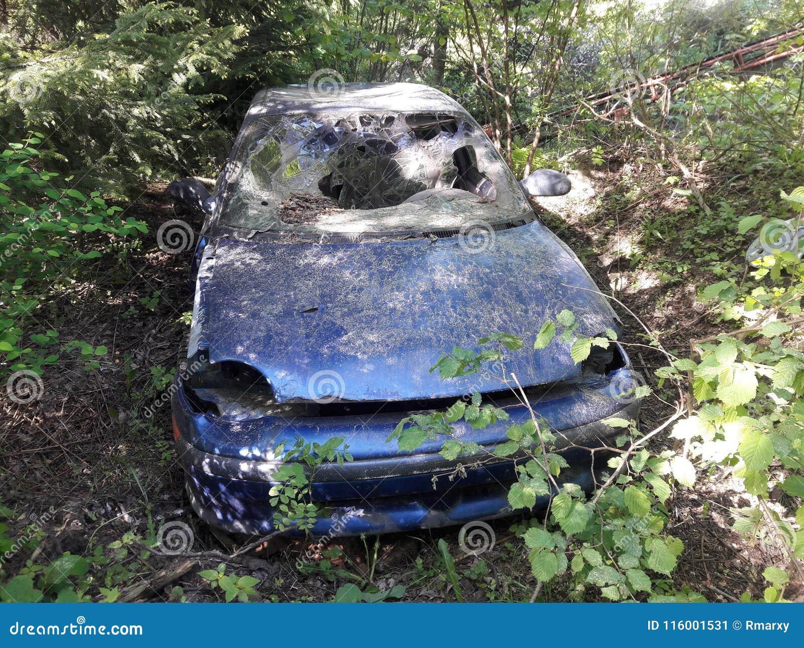 在灌木中间的老被击毁的汽车