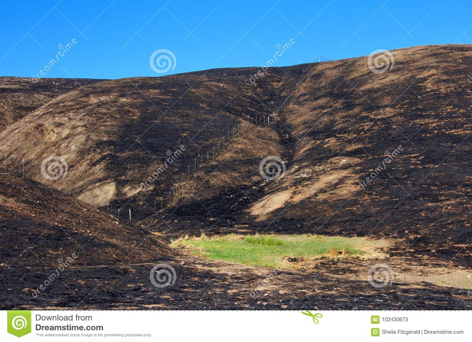 在火中间的绿草烧焦了谷蓝天