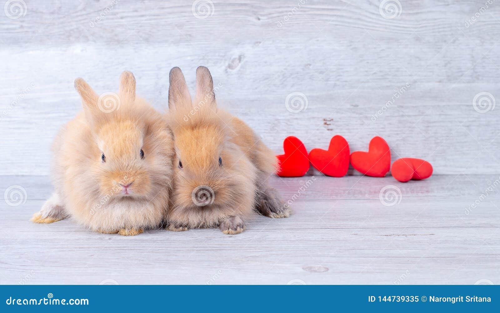 在灰色背景的夫妇小浅褐色的小兔在与微型心脏的华伦泰题材在他们后