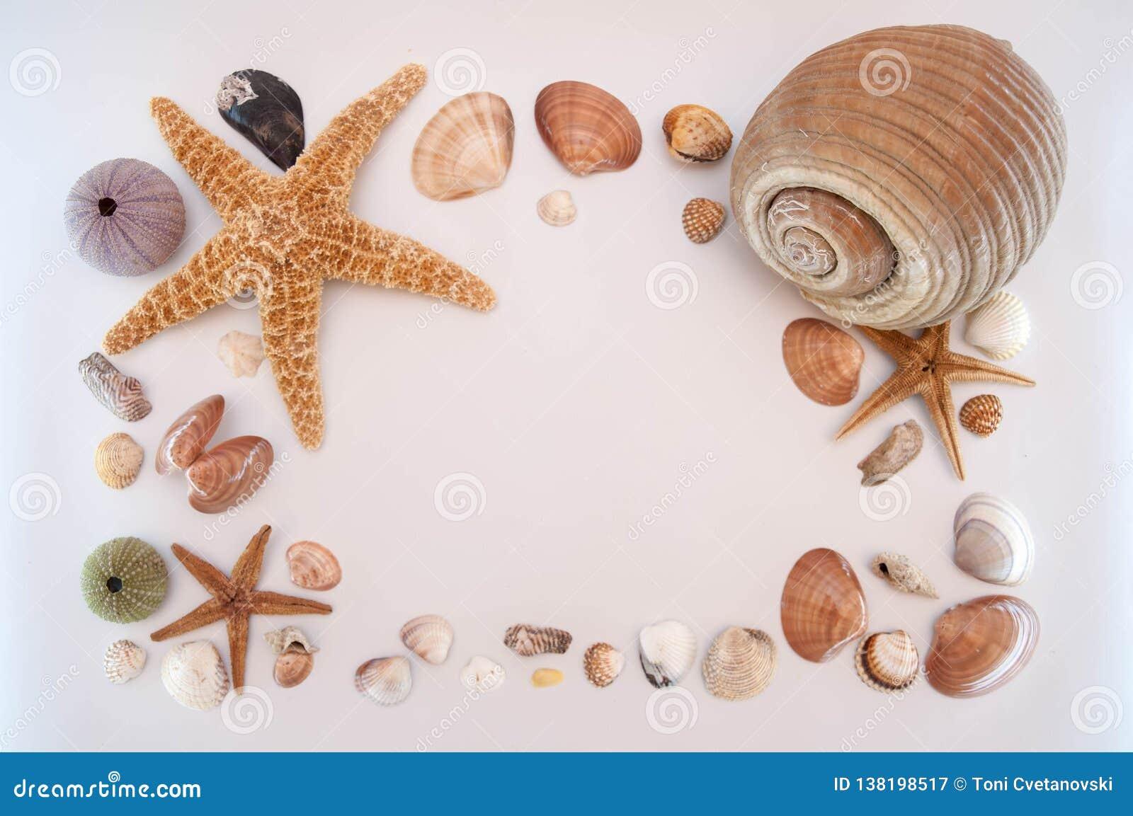 在灰色背景的海壳