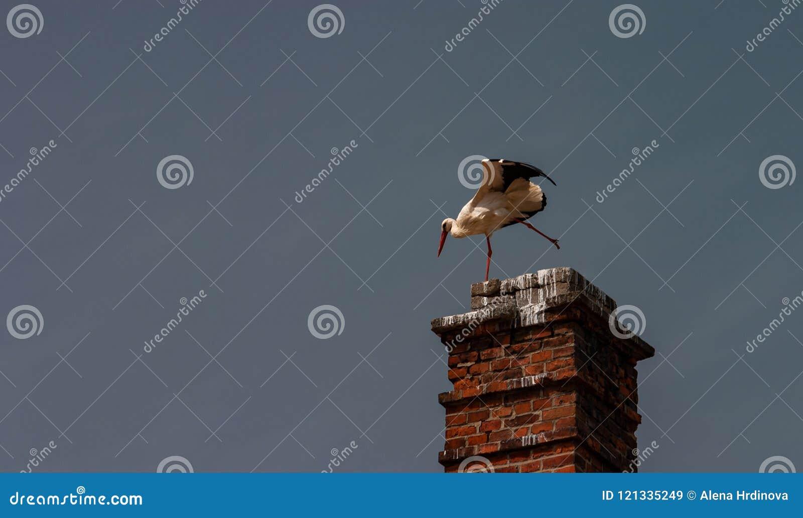 在烟囱Ciconia ciconia的上面的鹳