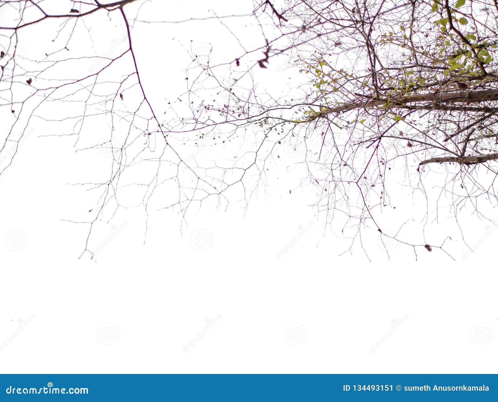 在热带田园诗海滩海洋旁边的美好的树枝自然和白色云彩天空及时休假