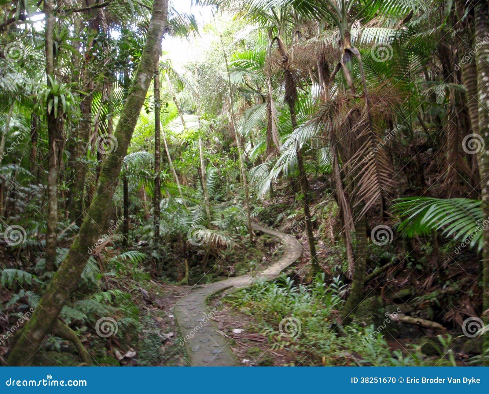 在热带雨林的弯曲的道路