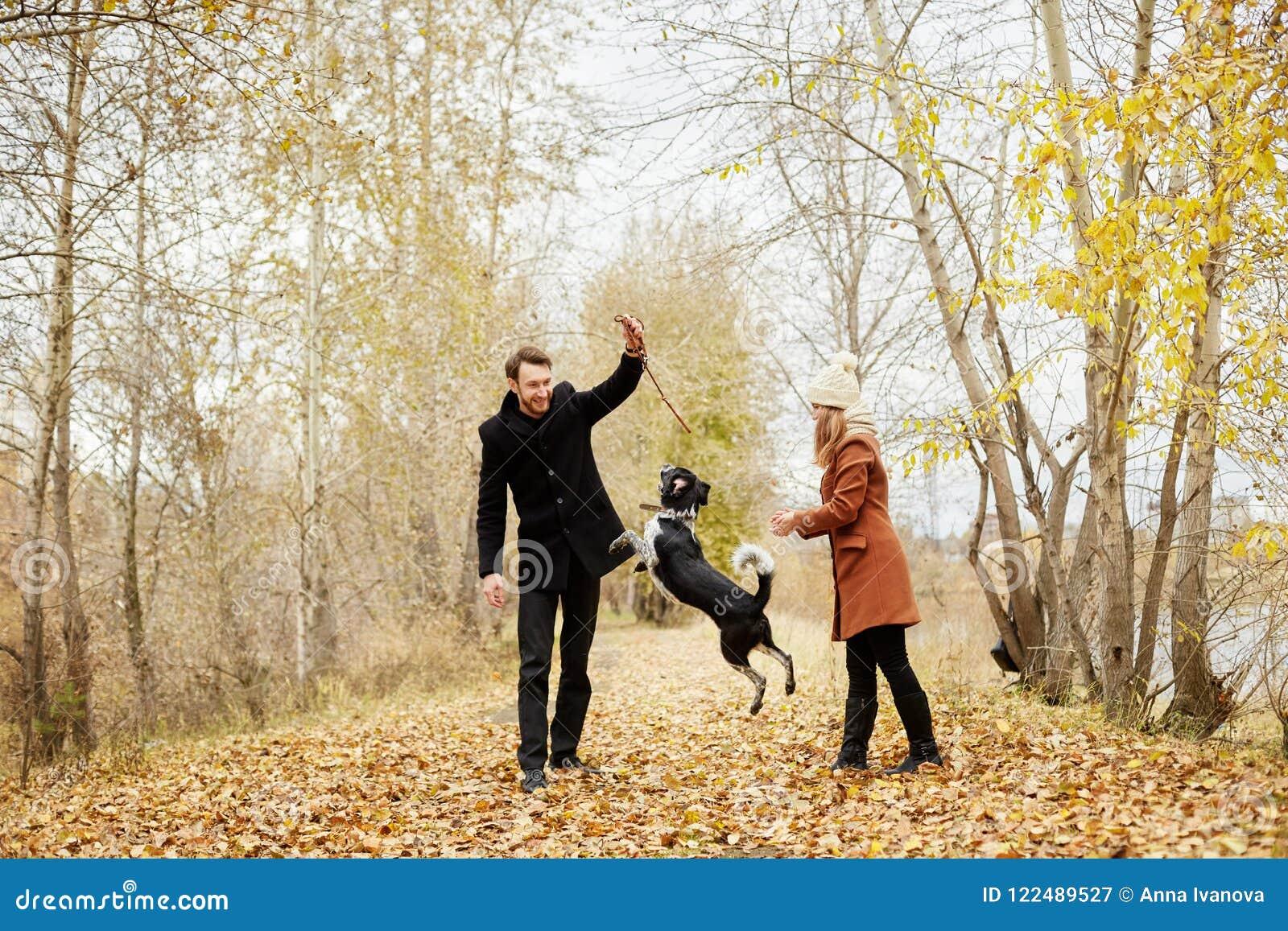 在爱的夫妇在一温暖的秋天天在有一个快乐的狗西班牙猎狗的公园走 爱和柔软在男人和妇女之间
