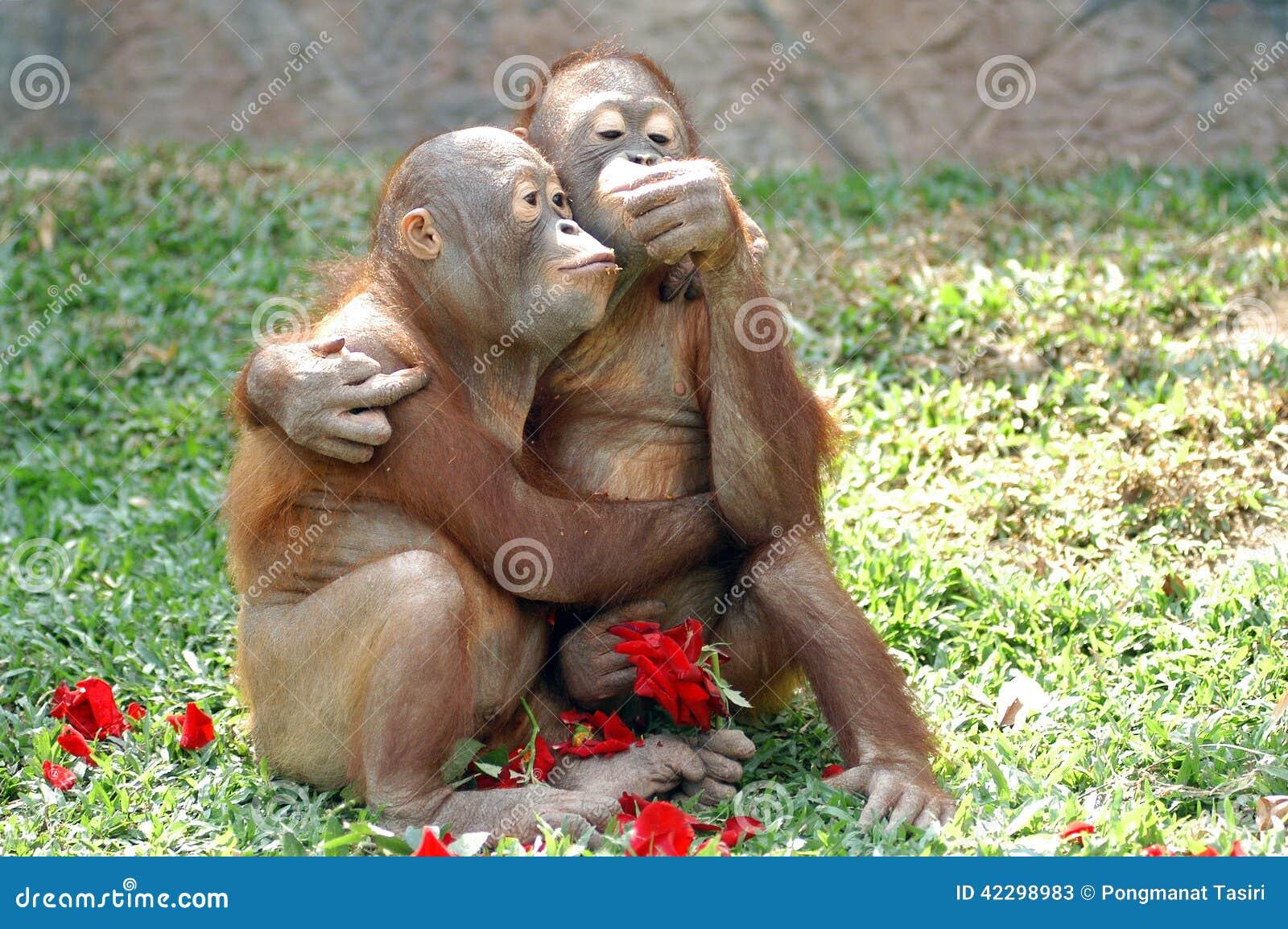 在爱的猴子
