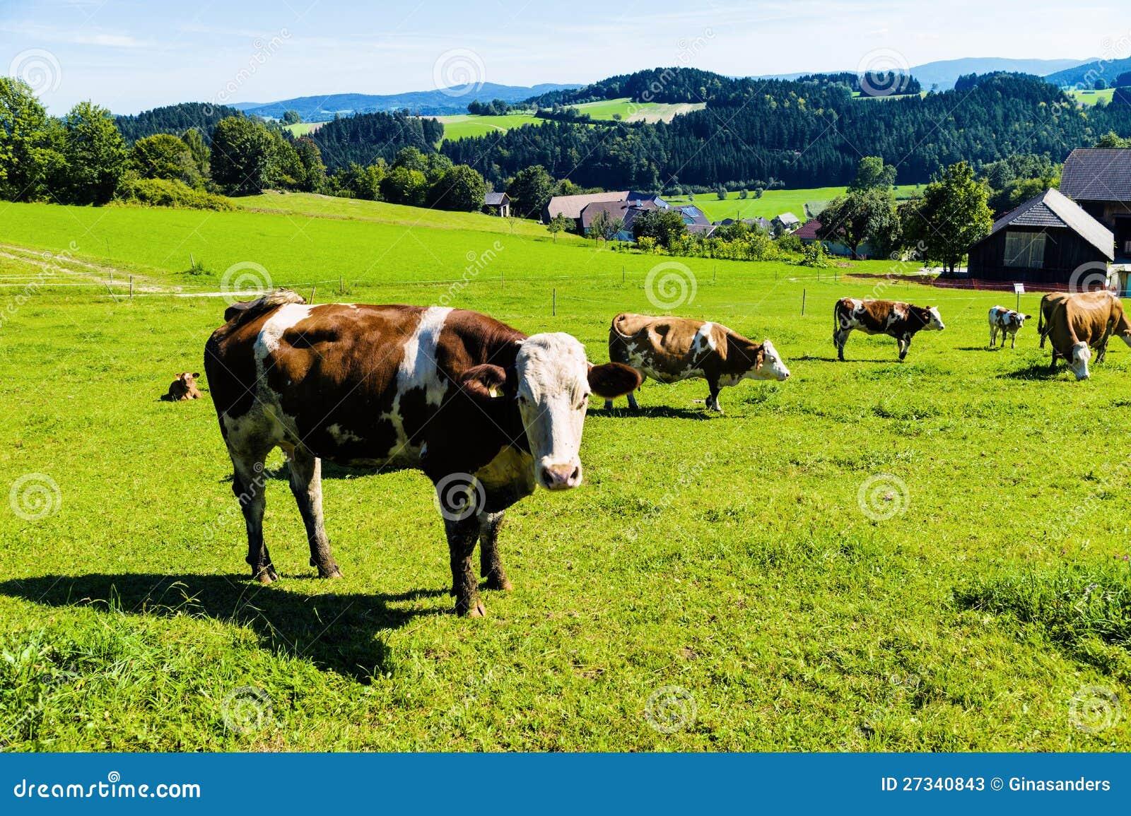 澳大利亚发展大牧场放牧业的有利条件_澳大利亚发展大牧场放牧业_qq牧场饲养大厅升级条件