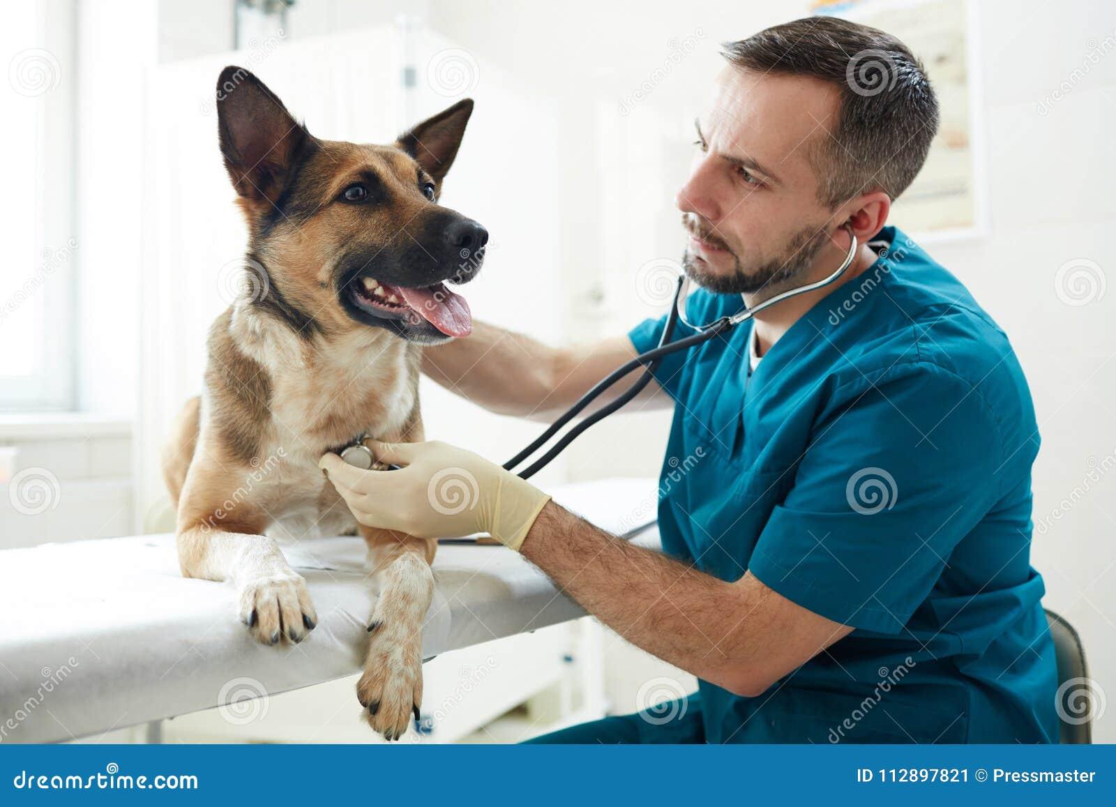 在狩医诊所的狗