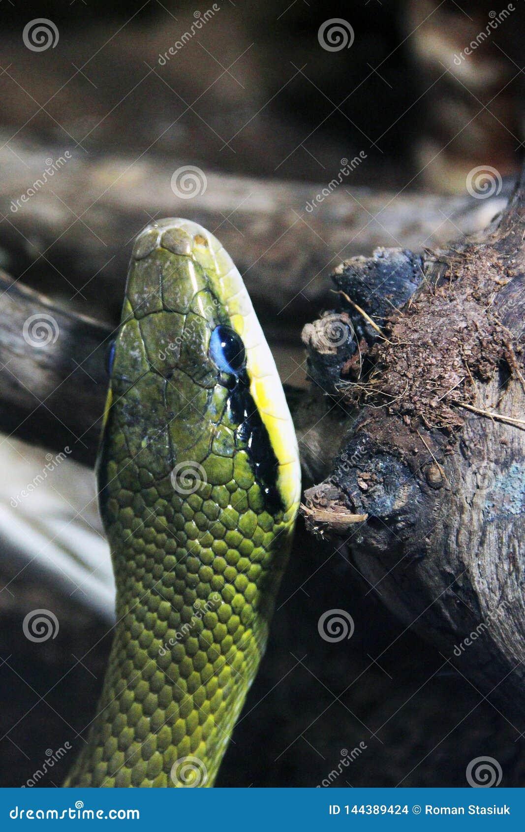 在玻璃容器的蛇