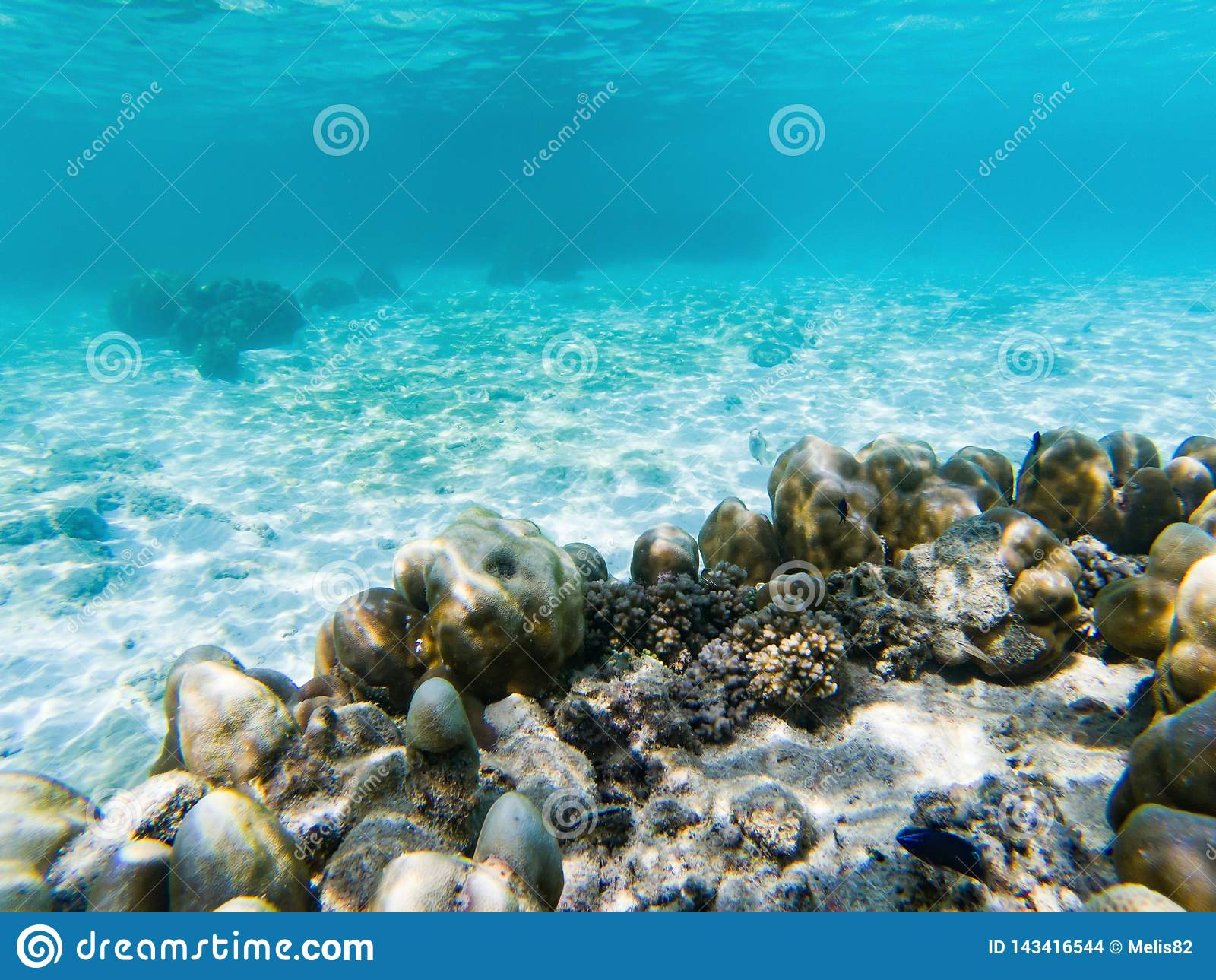 在珊瑚礁的水下的海洋生物