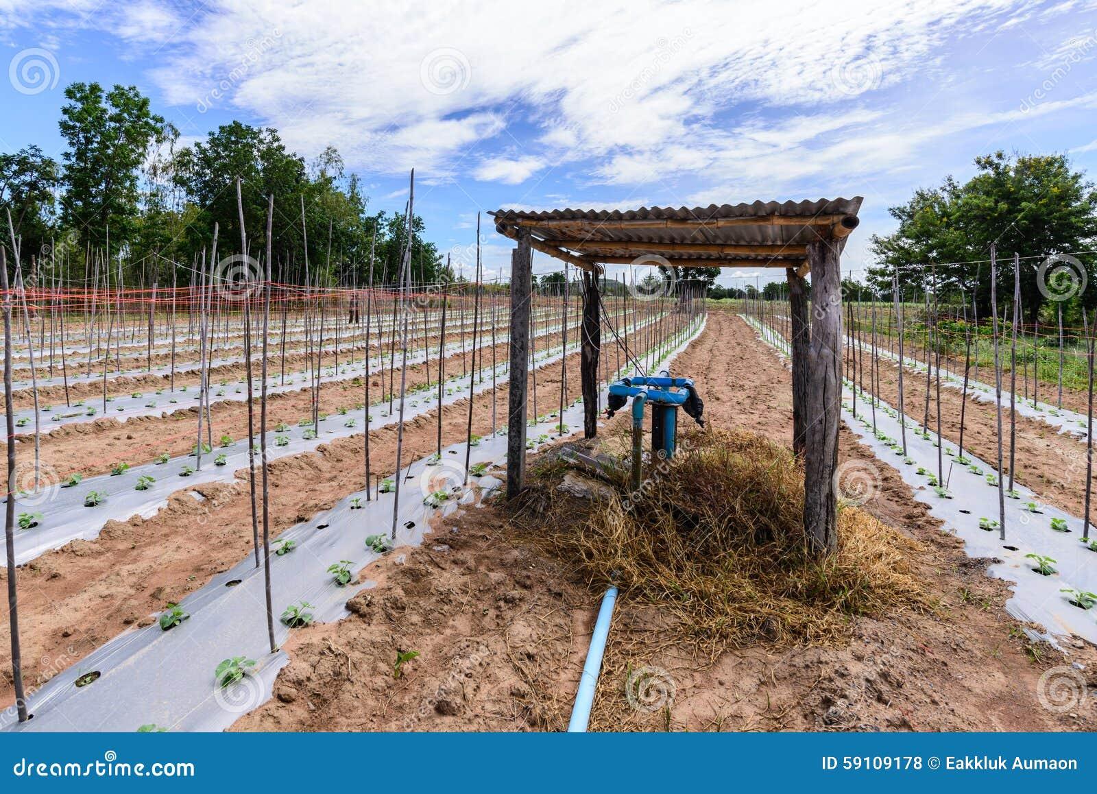 水在瓜领域的灌溉系统
