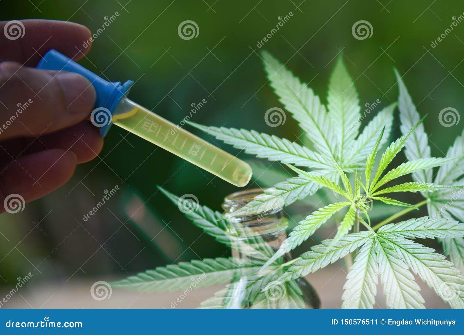 在瓶产品的大麻油- CBD从大麻叶子大麻叶子的背景/自然大麻医疗的医疗保健的油萃取物